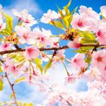 6 Ways I Cleansed My Life For Spring by Gabrielle Kassel